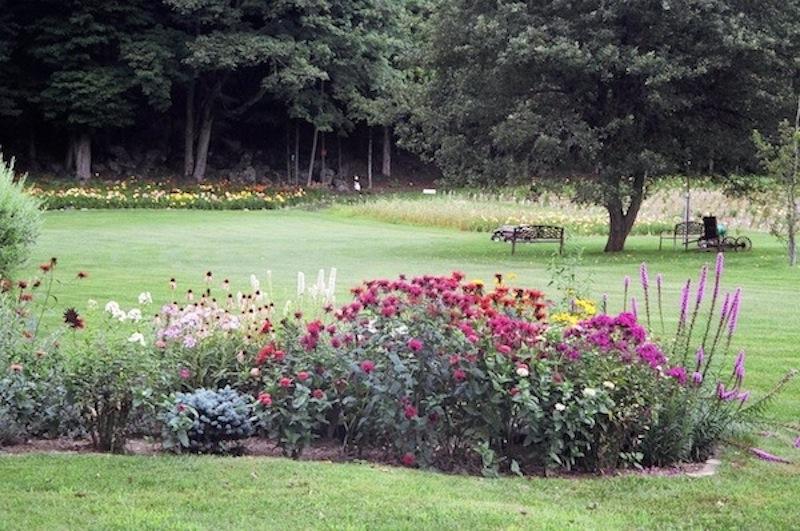 Pine Nook Daylilies perenial garden.