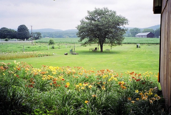 Pine Nook Daylilies Looking northeast, with Pine Nook Cemetery in the background..
